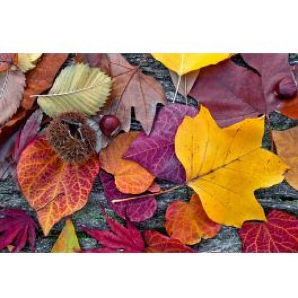Dimex Tapet Autumn Leaves från Dimex