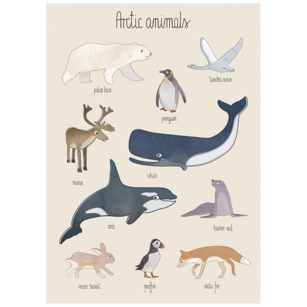 Poster Arctic Animals 50 X 70 Cm Sebra från Inget märke